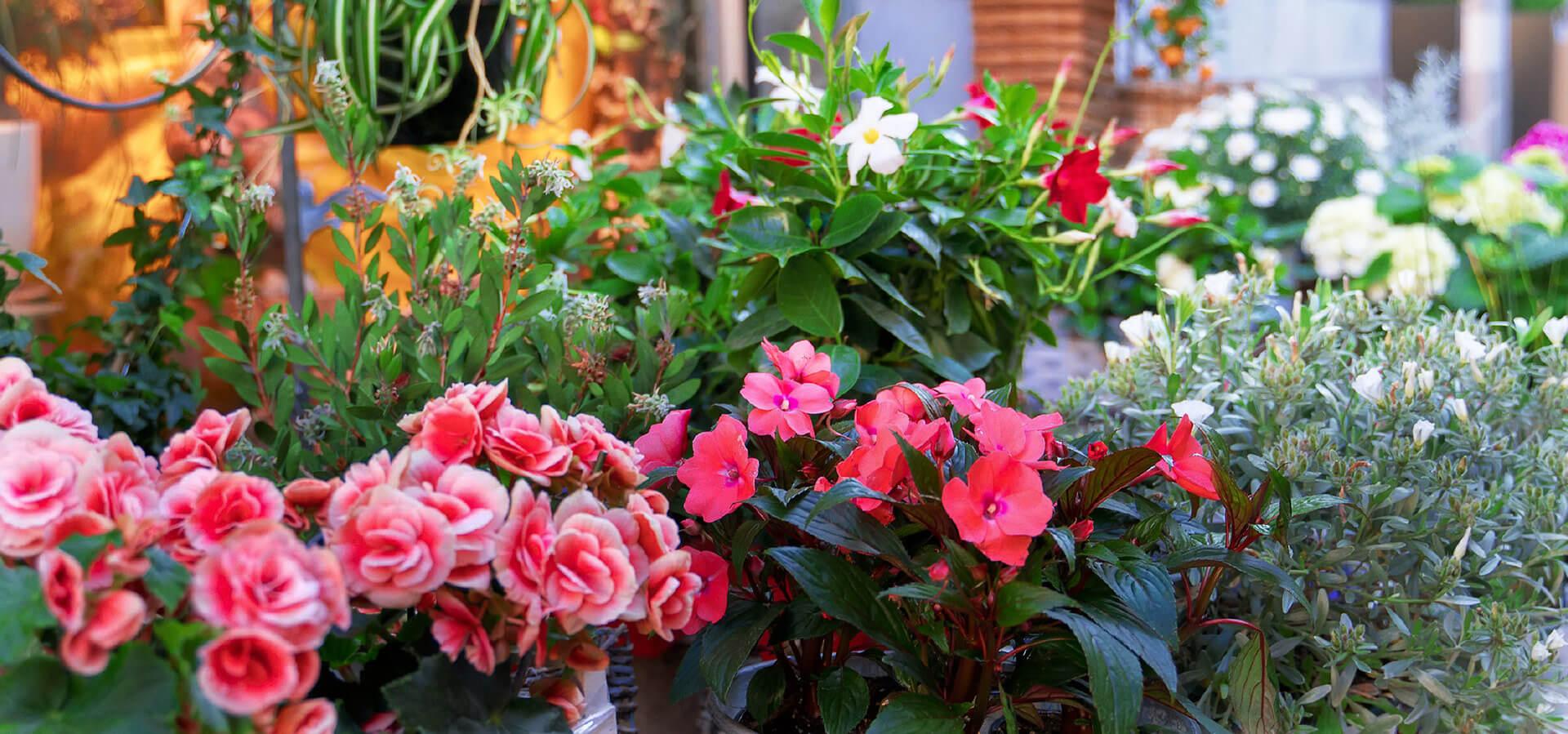 Image Jardins et  Extérieurs
