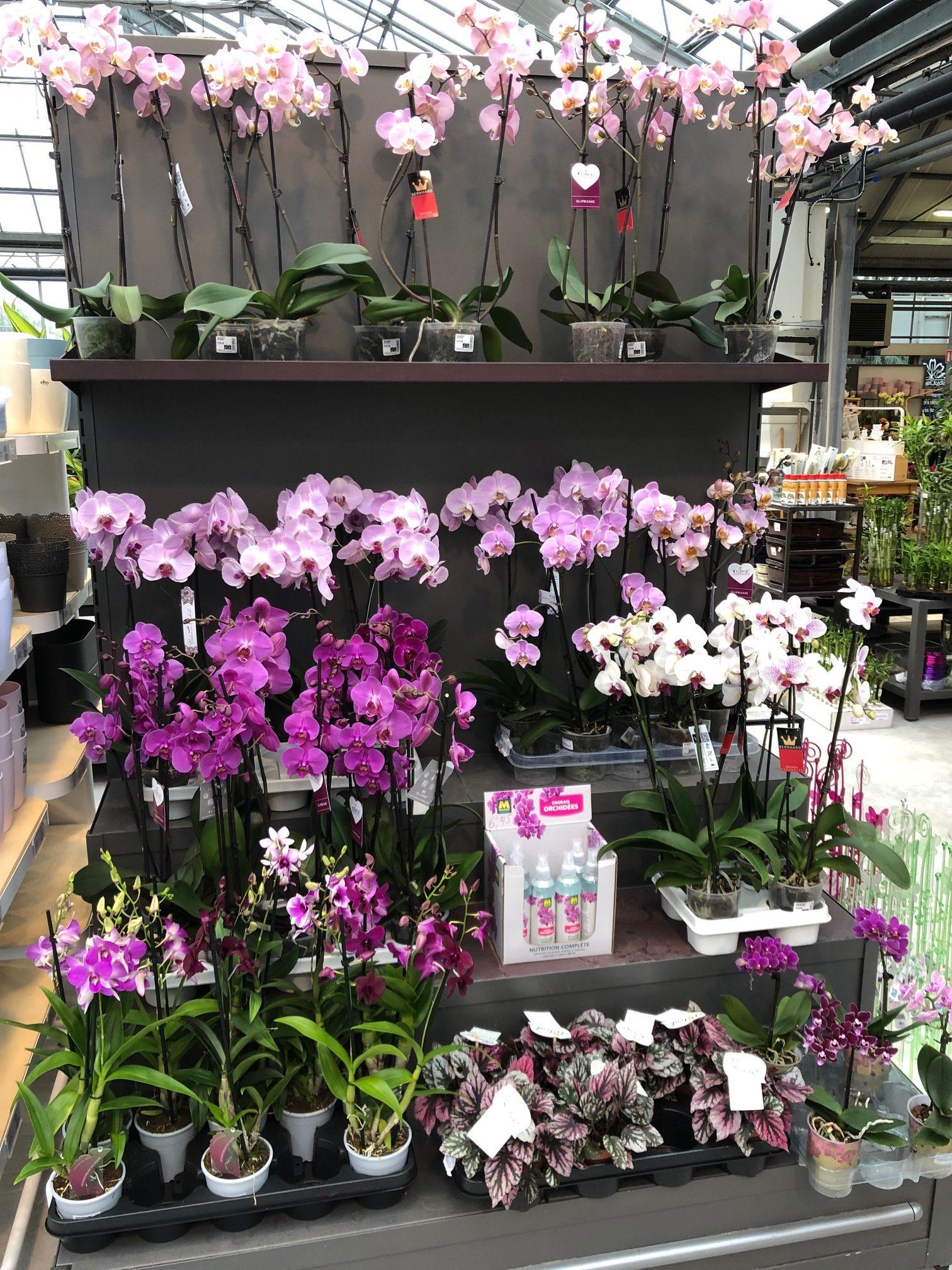Plantes d'intérieur - Paquet Jardin